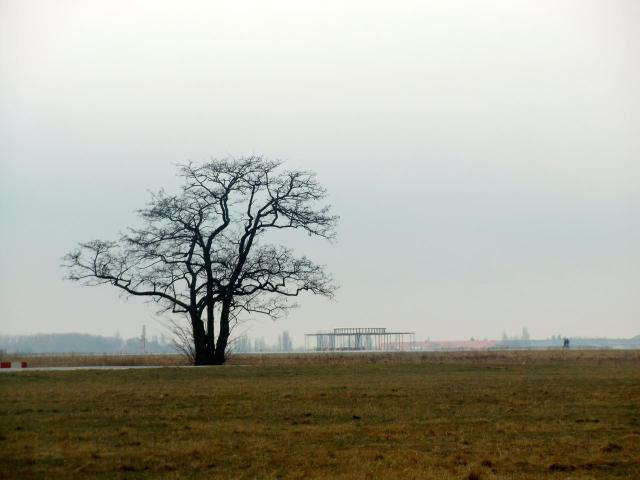 A tree standing alone in the landscape. At former Tempelhof Airport.